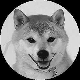 Pies pokładowy Miko