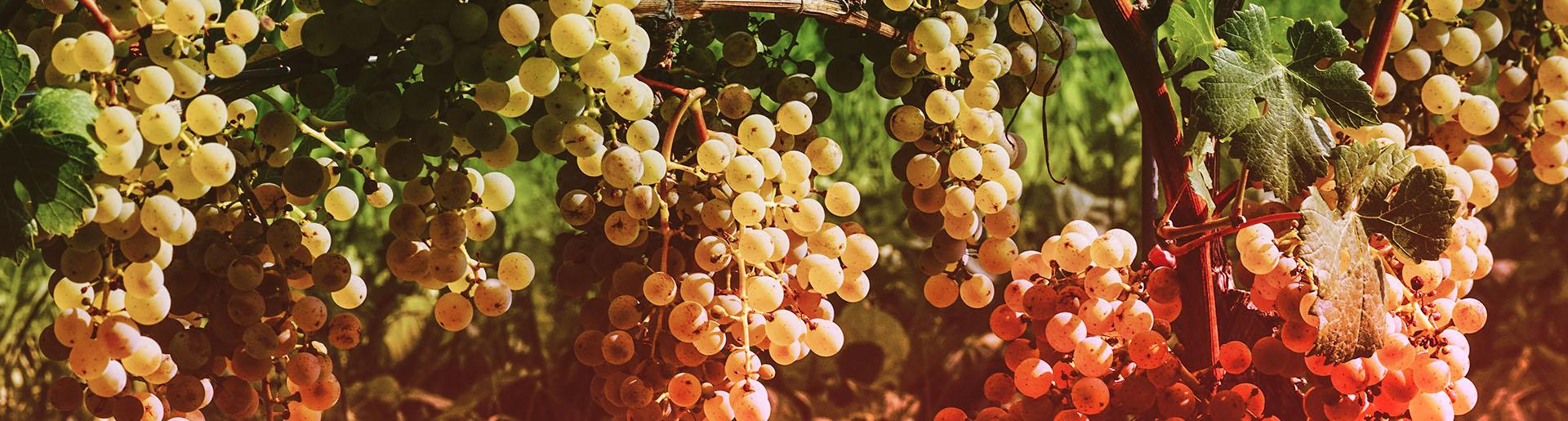 wine avenue slider